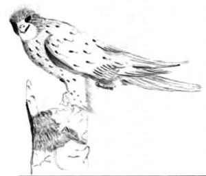 ilustrace4